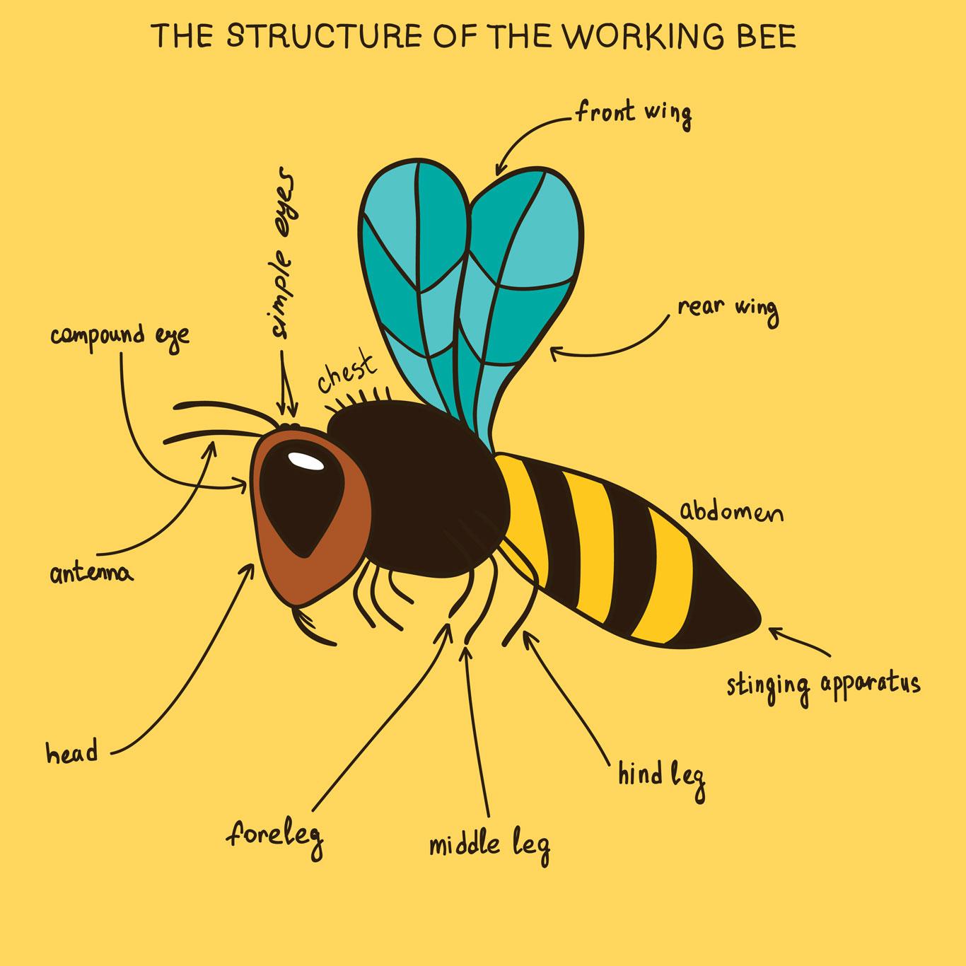 Bee-trivia-1366-0818