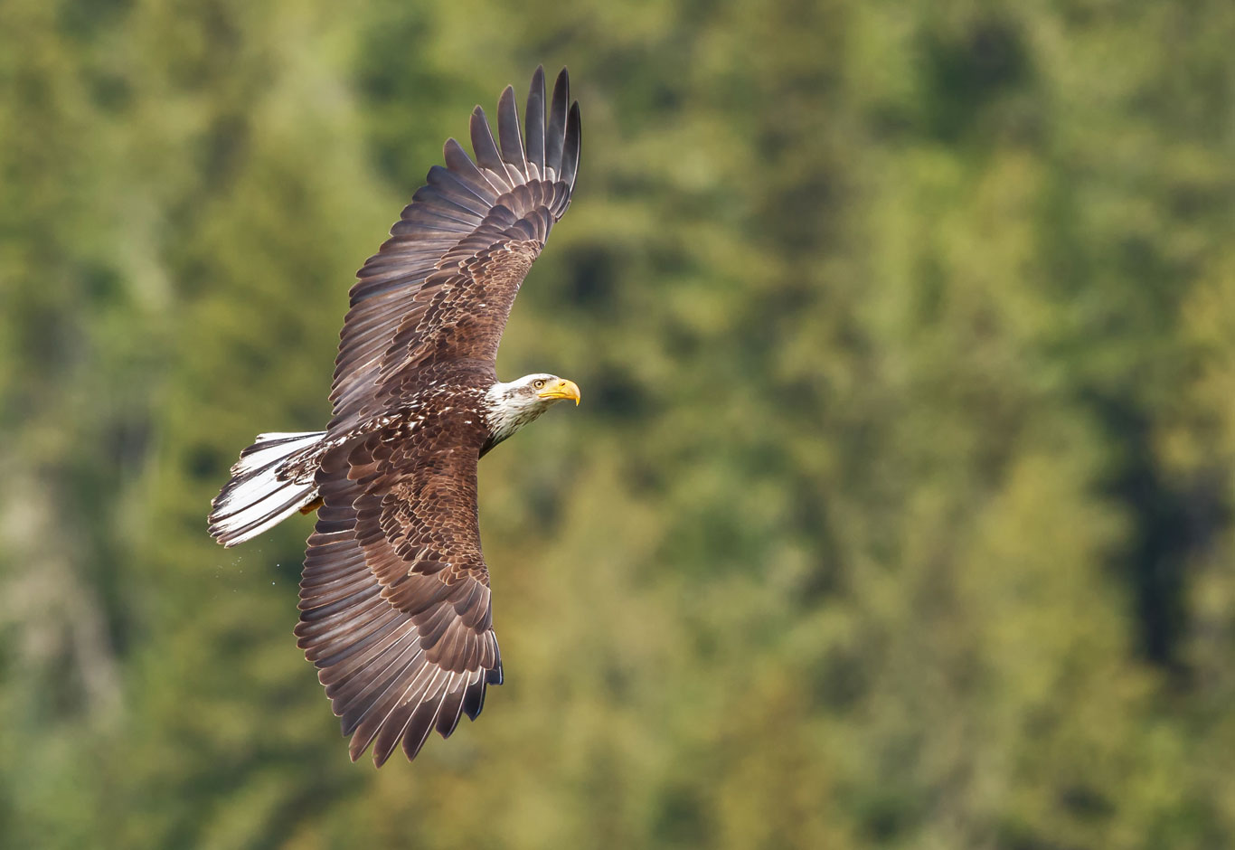 Camping-eagle-1366-0618