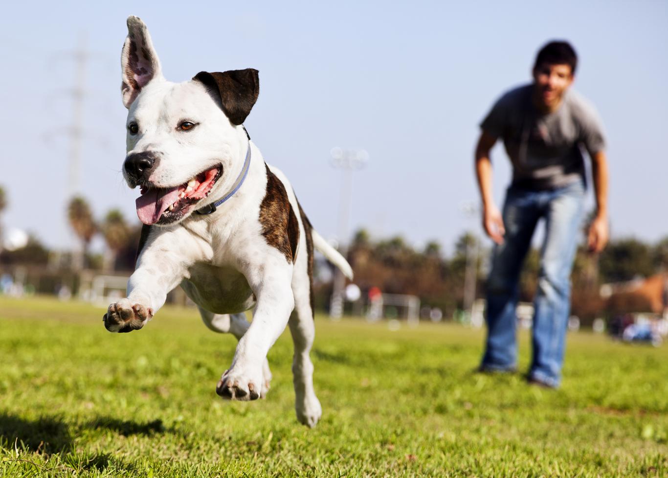 Dog-Day-Park-1366-0818