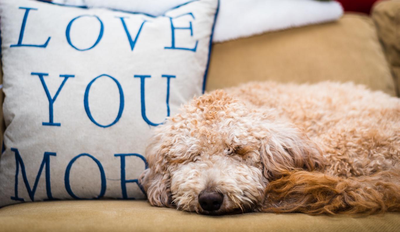 Dog-Day-Puppy-Love-1366-0818