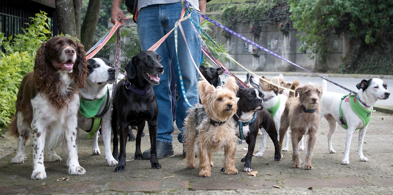 Dog-Day-Walking-Dogs-1366-0818