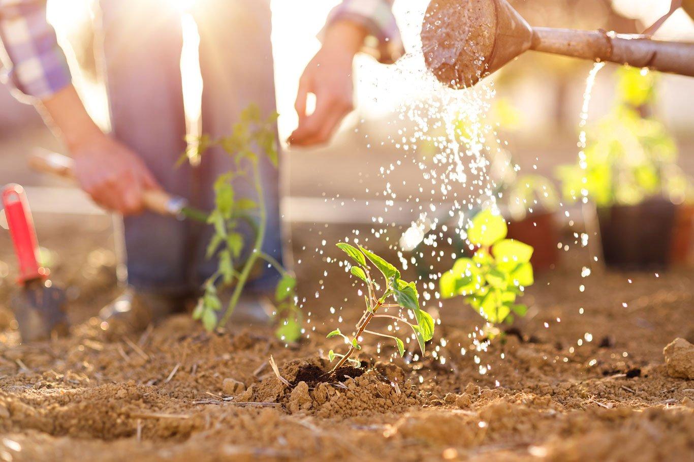 Growing-Vegetables-1366-0419