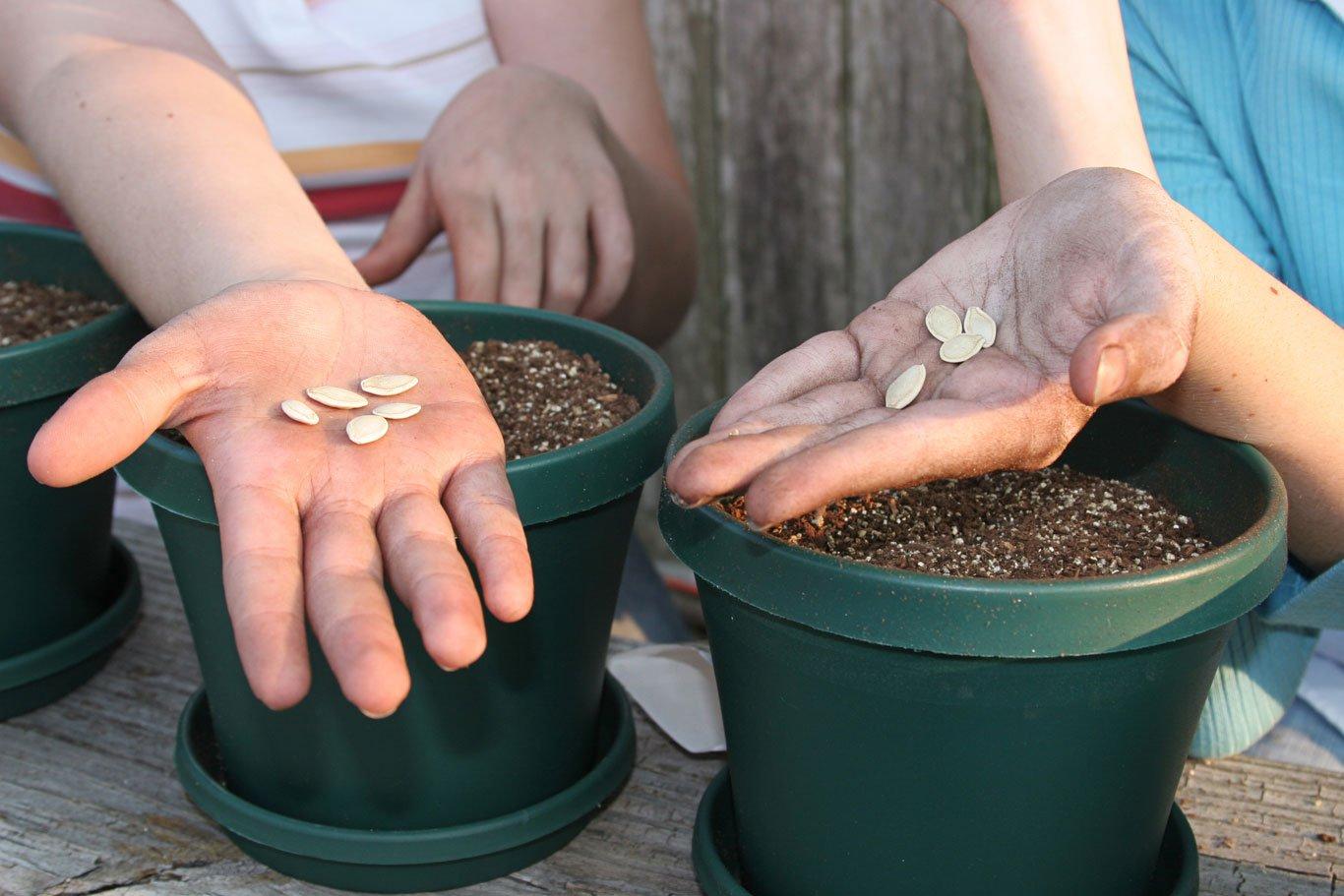 Seeds-gardening-1366-0618